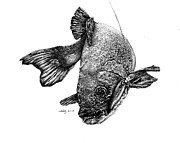 Fish Underwater Drawings - Walleye by Kathleen Kelly Thompson