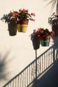 Linda Knorr Shafer - Wallflowers