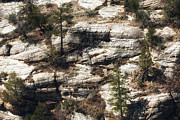 Cliff Dwellers Prints - Walnut Canyon Print by John Rizzuto