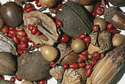 Pods Framed Prints - Walnuts, Acorns, Berries, Persimmons Framed Print by Brian Gordon Green