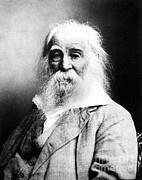 Walt Whitman Metal Prints - Walt Whitman, American Poet Metal Print by Sylvia Beach Collection, Princeton