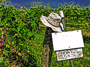 Wine Vineyard Photo Originals - Walts Hat by William Fields