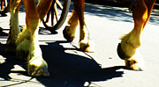 Horse And Wagon Prints - Waltzing Home Print by Steven  Digman