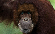 Orangutan Digital Art Metal Prints - WANNA MONKEY AROUND - Featured in the WILDLIFE Group Metal Print by EricaMaxine  Price