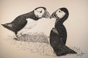 Puffin Drawings Posters - Wanting Poster by Saundra Smoker