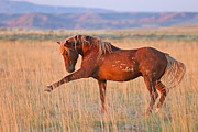 Wild Horse Metal Prints - War Horse Metal Print by Sandy Sisti