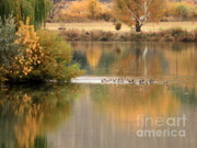 Yellow Leaves Posters - Warm Autumn River Poster by Carol Groenen