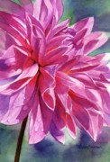 Watercolours Posters - Warm Red-Violet Dahlia Poster by Sharon Freeman