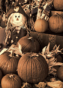 Corn Stalks Posters - Warm Sepia Scarecrow and Pumpikns Poster by Linda Phelps