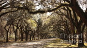 Tree-lined Framed Prints - Warm Southern Hospitality Framed Print by Carol Groenen