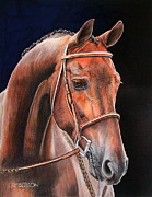 Head Shot Drawings - Warmblood II by Lori Lamberson