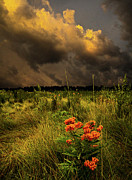 Environement Posters - Warmth Poster by Phil Koch