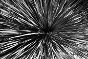 Warp Framed Prints - Warp Speed  Framed Print by Jason Smith
