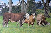 Louise Green - Warrawillah Cattle