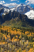 Evergreens Posters - Wasatch Mountains Autumn Poster by Utah Images