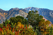 Snow Covered Mountains Prints - Wasatch Mountains In Autumn Print by Tracie Kaska
