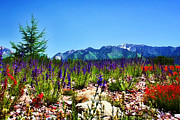 Landscapes Digital Art Prints - Wasatch Mountains In Spring Print by Tracie Kaska
