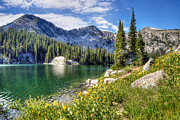 Summer Flowers Photos - Wasatch Mountains Utah by Utah Images