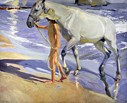 Young Horses Prints - Washing the Horse Print by Joaquin Sorolla y Bastida