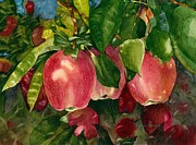 Apple Orchards Prints - Washington Apples Print by Laura Ramsey