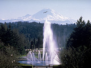 Campus Landscape Framed Prints - Washington Fountain To The Mountain Framed Print by University of Washington