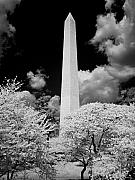 Washington Dc Framed Prints - Washington Monument During Cherry Blossom Festival in Infrared Framed Print by Carol M Highsmith