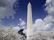 Washington Monument During The Cherry Print by Everett