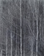 Bare Trees Prints - Washington Treeline Print by John Gilroy