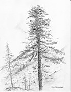 Jim Hubbard - Washington-Western Hemlock