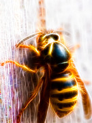 Wasp.insect Prints - Wasp Print by Hakon Soreide