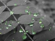 Rain Drop Art - Watch Your Step by Scott Hovind
