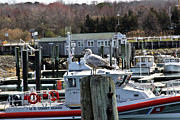 Cape Cod Metal Prints - Watchful Metal Print by Extrospection Art