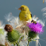 Wisconsin Wildflowers Prints - Watchful Eye - cropped Print by Bill Pevlor