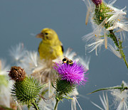 Wisconsin Wildflowers Prints - Watchful Eye Print by Bill Pevlor