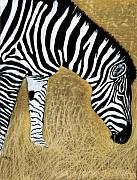 Zebra Pastels - Watchful Eye by Jan Amiss
