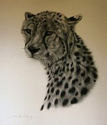 Cheetah Drawings Framed Prints - Watchful Framed Print by Lucinda Coldrey