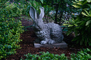 Heartbreak Photo Prints - Watchful Rabbit Print by Douglas Barnett