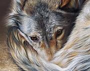 Watchful Rest -close-up Detail Print by Elena Kolotusha