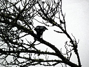 Crow Image Photos - Watching Others by Pamela Patch
