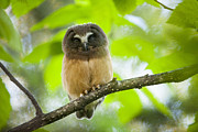 Owl Metal Prints - Watching the World Metal Print by Tim Grams