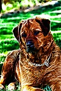 German Shepard Digital Art - Watching with Intent by Denise Oldridge