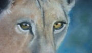 Lion Pastels Acrylic Prints - Watching You Watching Me Acrylic Print by Paul Horton