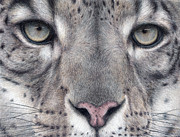 Colored Pencil Drawings Posters - Watching You...Snow Leopard Poster by Pat Erickson