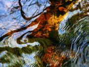 Caratunk Wildlife Refuge Posters - Water Abstract 24 Poster by Joanne Baldaia - Printscapes