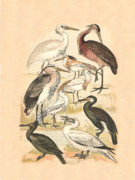 Birds - Water Birds by Eric Kempson
