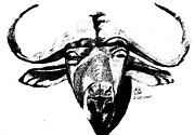 Labor Drawings - Water Buffalo BW by Gail Schmiedlin