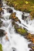 Fallen Leaf Posters - Water Cascading Down A Hill Poster by Craig Tuttle