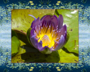 Flower Photos Framed Prints - Water Chalice Framed Print by Bell And Todd