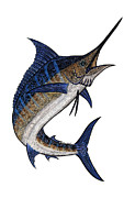 Sport Fish Prints - Water Color Tribal Marlin III Print by Carol Lynne