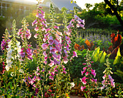 Foxglove Flowers Photos - Water Colors by Nava Jo Thompson